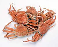 親蟹(セイコガニ)